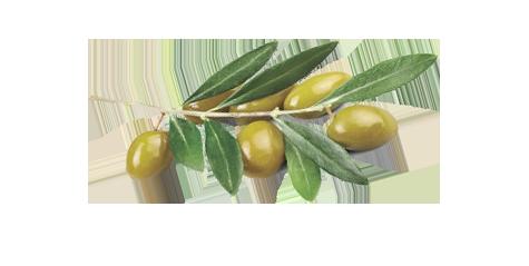 josepena-aceite-oliva-bg